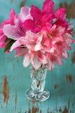 Azalées dans le vase en verre Photographie stock libre de droits