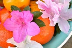 Azalées et oranges dans la cuvette bleue Photos stock
