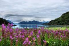 Azaléia Mountain View. Imagens de Stock Royalty Free