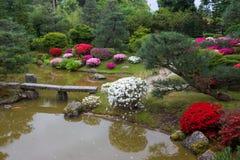 Azalea blossom in Japanese garden. Potsdam. Germany royalty free stock photos