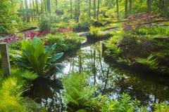 Azalea blossom in Japanese garden. Hague, Holland. nSunny day. May stock image