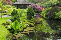 Azalea blossom in Japanese garden. Hague, Holland. nSunny day. May royalty free stock photo