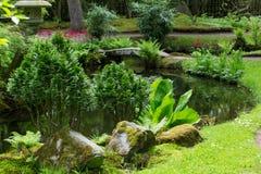 Azalea blossom in Japanese garden. Hague, Holland. nSunny day. May royalty free stock image
