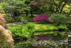 Azalea blossom in Japanese garden. Hague, Holland stock image