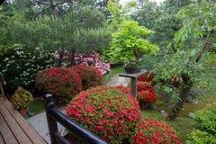 Azalea  blossom  and pond  in Japanese  Garden. Azalea blossom and pond in Japanese Garden. Potsdam , Germany royalty free stock image
