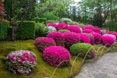 Azalea  blossom  and pond  in Japanese  Garden.  royalty free stock image