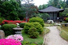Azalea  blossom  and pond  in Japanese  Garden. Potsdam, Germany royalty free stock photography