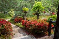 Azalea  blossom  and pond  in Japanese  Garden. Potsdam, Germany stock photography