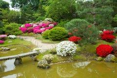 Azalea  blossom  and pond  in Japanese  Garden. Potsdam , Germany royalty free stock images