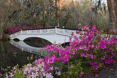 Azalea Bridge in Charleston, Sc lizenzfreies stockfoto