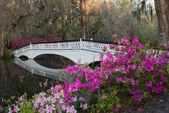 Azalea Bridge in Charleston, SC Royalty Free Stock Photo