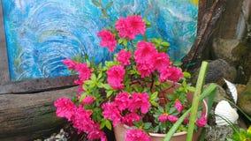 azalea Em meu pátio imagem de stock royalty free