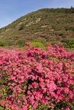 Azalea en heuvel stock afbeeldingen