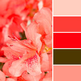 Azalea en kleurenmonsters Stock Foto's