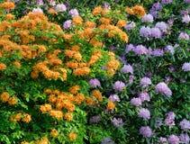 Azalea en Rododendron Royalty-vrije Stock Afbeeldingen