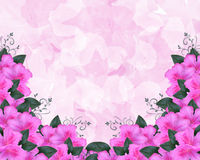 Azalea Floral Invitation Border Pink  Stock Photography