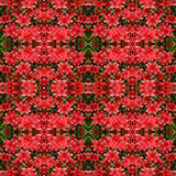 Azalea flower background Stock Photos