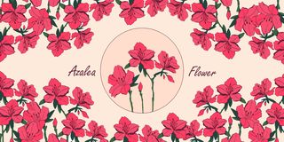 Azalea flower card with place for text. Vector azalea  flower bouquets . Botanical illustration for poster or packaging design stock illustration