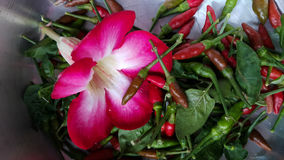 Azalea flower and chilli. Flower chilli spicy cooking vegetable Royalty Free Stock Image