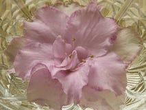 Azalea flower Stock Image