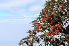 Azalea flower Stock Photography