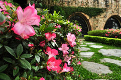 Azalea flowers and brick wall castle Stock Images