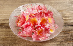 Azalea flowers in glass bowl on wooden background. Stock Photography