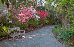 Azalea Garden and bench Royalty Free Stock Photo