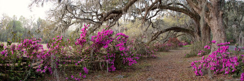 Azalea Garden in Charleston, SC royalty free stock photos