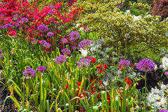 Azalea Garden Royalty Free Stock Images