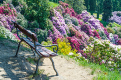 Azalea garden in italy Royalty Free Stock Images