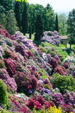 Azalea garden in italy Royalty Free Stock Photos
