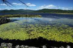 Azalea lake Royaltyfri Bild