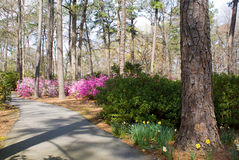 Azalea Path Stock Images