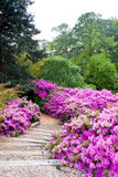 Azalea Path Royalty Free Stock Images