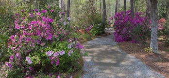 Azalea and pathway Stock Photos