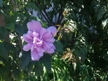 Azalea, plants Stock Photo