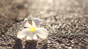 Azalea por la mañana imagenes de archivo