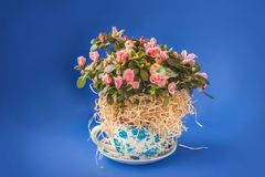 Blooming azalea  rhododendron  with stickers of a pair of duck Stock Photos