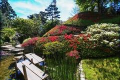 Azalea roja de Phododendrons en la colina en París pueda imagen de archivo