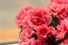 Azalea rosa vicino alla finestra Immagini Stock