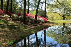 Azalea's bij Callaway-Tuinen royalty-vrije stock foto's