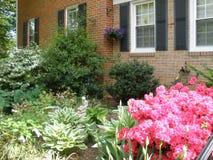 Azalea's in bloei: Voorzijde van huis, Springfielf, VA Stock Foto's