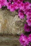 Azalea's en Rustiek Hout Stock Foto's