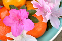Azalea's en sinaasappelen in blauwe kom Stock Foto's