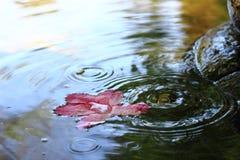 Azalea sulla fontana Fotografie Stock Libere da Diritti