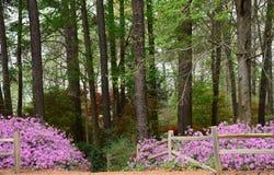 Azalea Trail Stock Photos