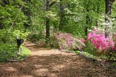 Azalea Walk US National Arboretum Washington DC. The woodland azalea trail follows the contours of Mount Hamilton at the 443-acre US National Arboretum in Royalty Free Stock Images
