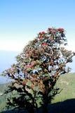 Azaleabloem bij een klip op een berg royalty-vrije stock foto