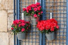 Azaleabloemen in decoratieve emmers die op de muur hangen royalty-vrije stock fotografie